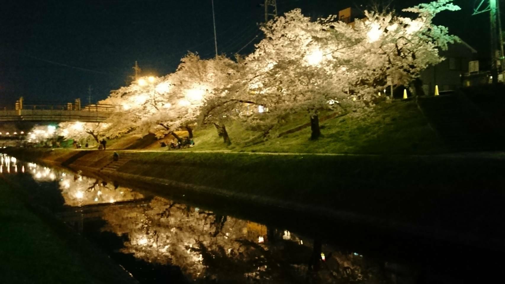 夜景 桜並木